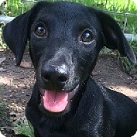 Adopt A Pet :: Walker Weedle - Houston, TX