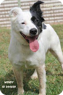 Border Collie Mix Dog for adoption in Camden, Delaware - Wendy