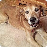 Adopt A Pet :: Stockton McCoy - Los Angeles, CA