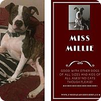 Adopt A Pet :: Millie - Des Moines, IA