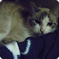 Adopt A Pet :: Melanie - Hamburg, NY