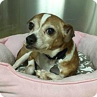 Adopt A Pet :: Beacon - Oak Park, IL