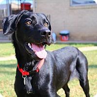Adopt A Pet :: Gemma - Shreveport, LA