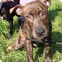 Adopt A Pet :: DUKE - Northeast, OH