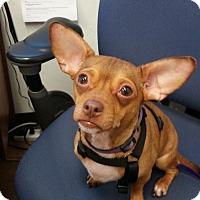 Adopt A Pet :: Rudy - Winston-Salem, NC