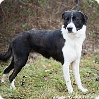 Adopt A Pet :: Xander - Louisville, IL