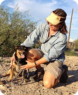 Australian Cattle Dog/Miniature Pinscher Mix Dog for adoption in Thatcher, Arizona - Rico