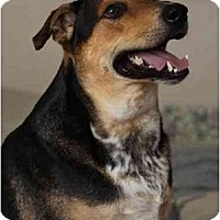 Adopt A Pet :: Wynter - Ponca City, OK