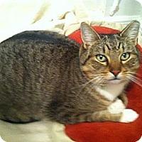 Adopt A Pet :: Rocky - Brooklyn, NY