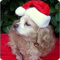 Adopt A Pet :: Murphy - Tacoma, WA