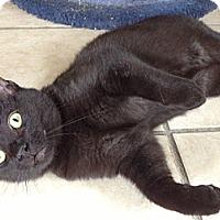 Adopt A Pet :: Clyde - Byron Center, MI