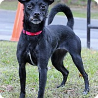 Adopt A Pet :: Pepper - Port Washington, NY