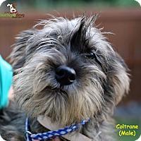 Adopt A Pet :: Coltrane - Alpharetta, GA