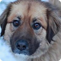 Adopt A Pet :: Chuka - Bedminster, NJ