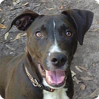 Adopt A Pet :: Strap - Groveland, FL