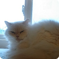 Adopt A Pet :: JInxie - Glen cove, NY