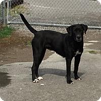 Adopt A Pet :: Phoenix - Lewisburg, TN