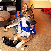 Adopt A Pet :: Rosie - Pleasant Grove, CA