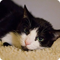 Adopt A Pet :: Moocat - Grayslake, IL