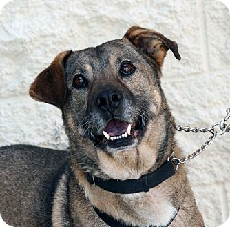 German Shepherd Dog Mix Dog for adoption in Palmdale, California - Frank