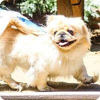 Adopt A Pet :: Donny - Corona, CA