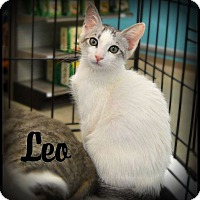 Adopt A Pet :: Leo - Sherman Oaks, CA
