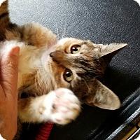 Adopt A Pet :: Rilee - Geneseo, IL