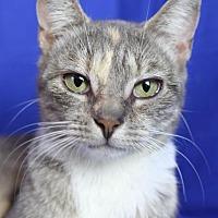 Adopt A Pet :: Amelia - Winston-Salem, NC