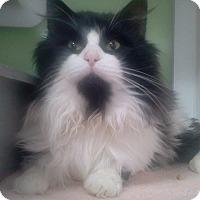 Adopt A Pet :: Hugo - Muskegon, MI