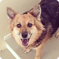 Adopt A Pet :: Mina - Las Vegas, NV