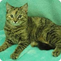 Adopt A Pet :: Agatha - Elkhorn, WI