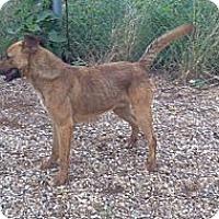 Adopt A Pet :: Brock - Childress, TX