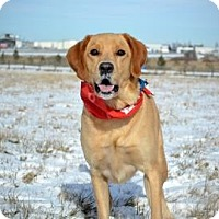 Adopt A Pet :: Bo - Cheyenne, WY