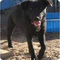 Adopt A Pet :: Pepper - Golden Valley, AZ