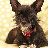 Adopt A Pet :: Lilly - Wytheville, VA