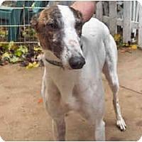 Adopt A Pet :: Amanda - Philadelphia, PA