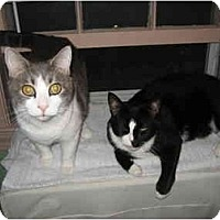 Adopt A Pet :: Piper and Max - Quincy, MA