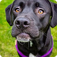 Adopt A Pet :: Tucker - Seattle, WA