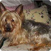 Adopt A Pet :: Romeo - Mooy, AL