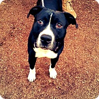 Adopt A Pet :: Johnny cash - grants pass, OR