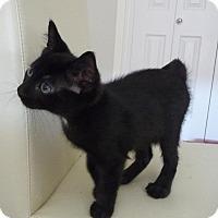 Adopt A Pet :: Kyota - Edmonton, AB