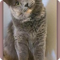 Adopt A Pet :: Leilani Kon Tiki 18119 - Pampa, TX