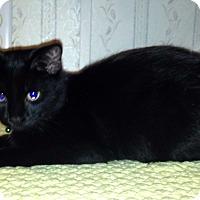 Adopt A Pet :: Alex Blake - Muskegon, MI
