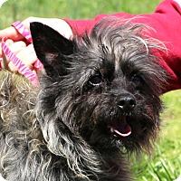 Adopt A Pet :: Gypsy - Glastonbury, CT