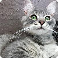 Adopt A Pet :: Rory - Seaford, DE