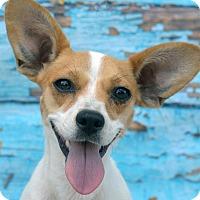 Adopt A Pet :: EVIE - LAFAYETTE, LA