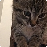 Adopt A Pet :: Bessie - St. Louis, MO