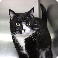 Adopt A Pet :: Moxie - Middletown, CT