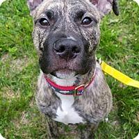 Adopt A Pet :: Utah - Newtown, CT