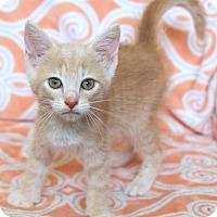 Adopt A Pet :: Polaris - St Louis, MO